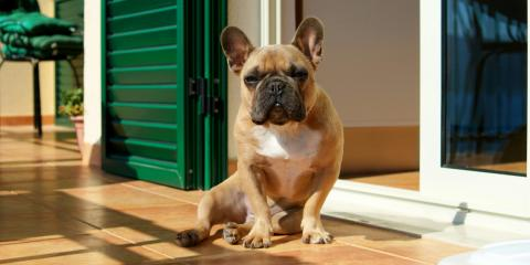 3 Best Flooring Materials for Pet Owners, Honolulu, Hawaii
