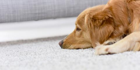 3 Carpet Care Tips for Pet Owners, Thayer, Missouri