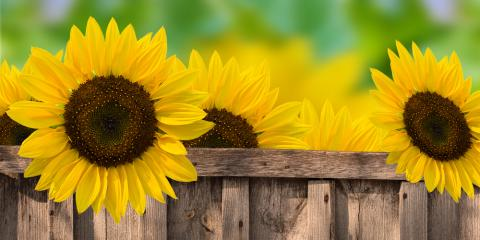 Floral Delivery: Nothing Says Summer Like a Fresh Batch of Sunflowers, Lakeville, Connecticut
