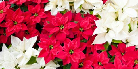 3 Reasons to Order a Holiday Floral Arrangement From Gratitude-Heart-Garden Florist, Chicago, Illinois