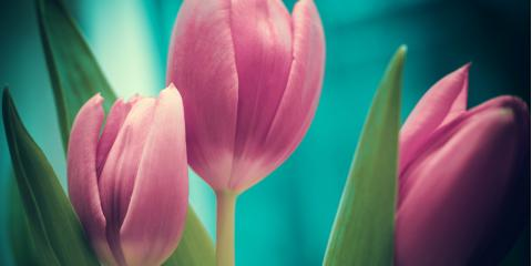 Bring Spring to Your Winter With Tulips , Lakeville, Connecticut