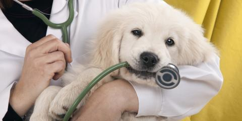 What to Expect During Your Puppy's First Veterinary Visit, Florence, Kentucky