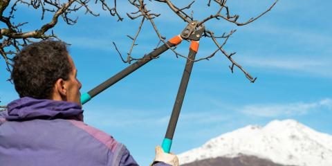 3 Reasons to Trim Your Trees in Winter, Florence, Kentucky