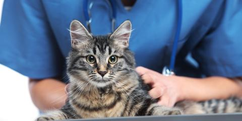 5 Cat Diseases Your Veterinarian Can Prevent With Vaccinations, Florence, Kentucky