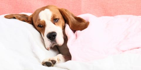 Veterinarian Offers 4 Signs Your Dog has Seasonal Allergies, Florence, Kentucky