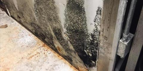 What is a Mold Test, a Protocol and when do you need one?, St. Augustine, Florida