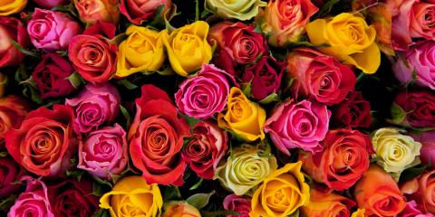 Your Guide to Rose Colors & Their Meanings, Altadena, California