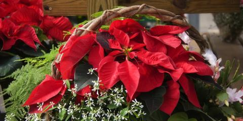 Hinesville Florist Shares How to Care for Your Poinsettias, Flemington, Georgia