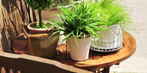 Hilton Florist Explains How to Prepare Houseplants for Outdoor Exposure, Parma, New York