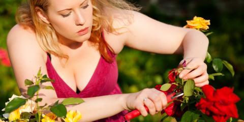 Top 3 Tips for Growing a Rose Garden, Texarkana, Texas