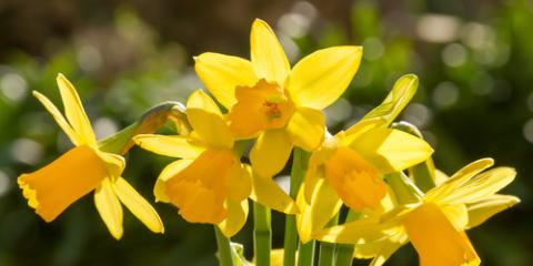 Choose These 5 Beautiful Flowers for Your Spring Event, Newport-Fort Thomas, Kentucky