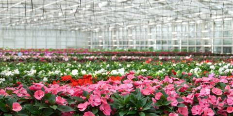 3 Amazing Ways Greenhouses Produce Nourishing & Stunning Plants, Colerain, Ohio