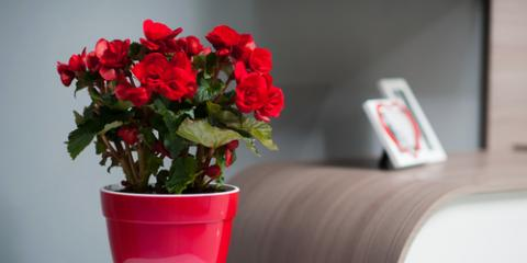 5 Best Flowers to Brighten Up Your Apartment, Fort Dodge, Iowa