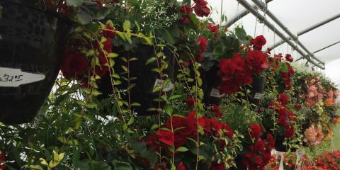 Flower Blast Sale on Memorial Day 9 - 4, Byron, Wisconsin