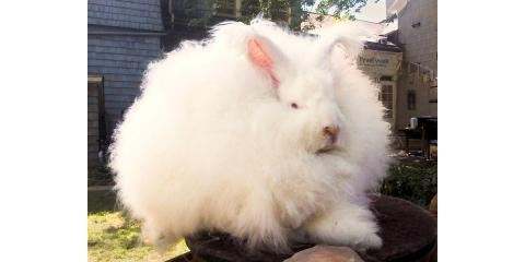 Do you know some Bunny that needs a Good Hare Day?, ,