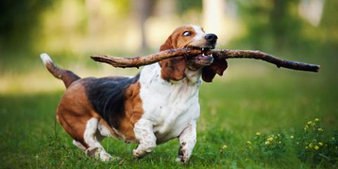 5 Tips When Looking for a Quality Doggy Day Care, Foley, Alabama