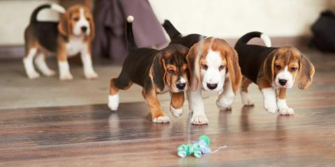 4 Do's & Don'ts of Hardwood Floor Care When You Have Pets, Foley, Alabama
