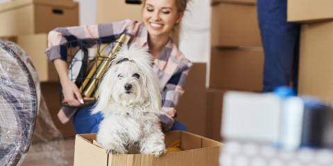 5 Tips for Moving With Pets, Orange Beach, Alabama