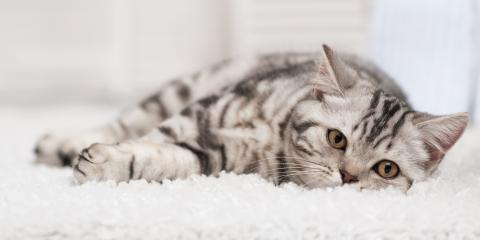 A Guide to Choosing the Best Carpet When Living With a Cat, Foley, Alabama