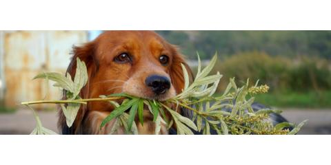 Waipahu's Best Veterinary Hospital on Hawaiian Plants That Are Toxic for Pets, Ewa, Hawaii
