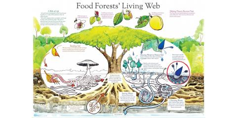 Soil Food Web, Brandon, Florida