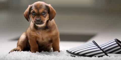 Pet-Friendly Flooring Services for Adopt a Dog Month in October, Forest Lake, Minnesota