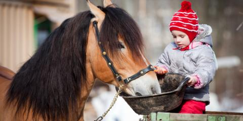Missouri's Top Pet Supply Dealer Offers 3 Winter Care Tips for Your Horses, Foristell, Missouri