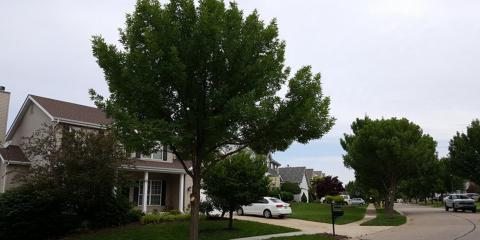 4 Benefits of Thinning Tree Canopies, Boone, Missouri