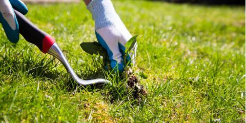 3 Harmful Lawn Weeds Every Gardener Should Keep on Their Radar, Foristell, Missouri