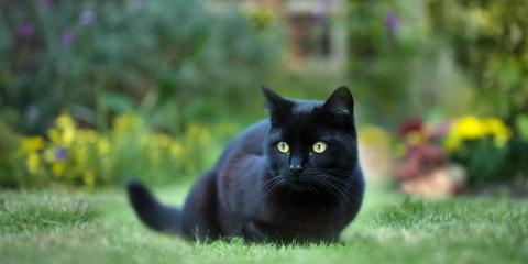 Celebrate National Black Cat Day on October 27!, Covington, Kentucky