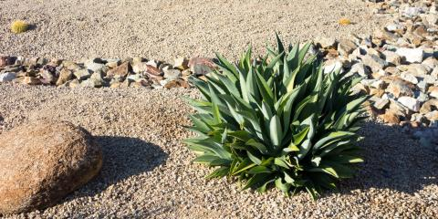 A Guide to Xeriscaping, Fort Worth, Texas