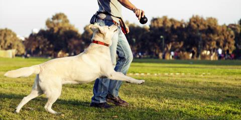 5 Factors That Contribute to Yellow Spots on the Lawn, Fort Worth, Texas