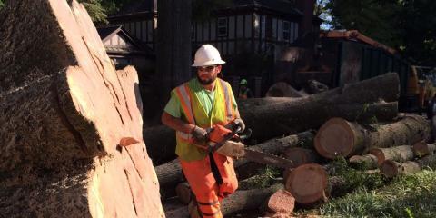 Frady Tree Care, Tree Service, Services, Winston Salem, North Carolina