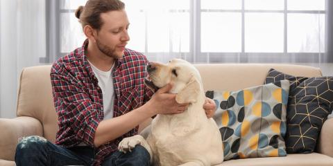 Top 3 House Cleaning Tips for Dog Owners, Tuscarora, Maryland