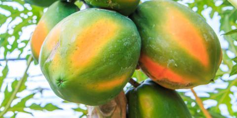 3 Health Benefits of Eating Papaya, Honolulu, Hawaii