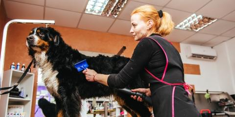 The Top 5 Benefits of Professional Dog Grooming, Covington, Kentucky