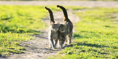 Important Pet Care & Safety Tips for Outdoor Cats, Covington, Kentucky