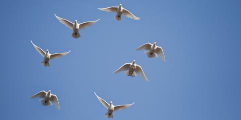 Funeral Dove Release: What Happens and What Should You Expect?, Covington, Kentucky