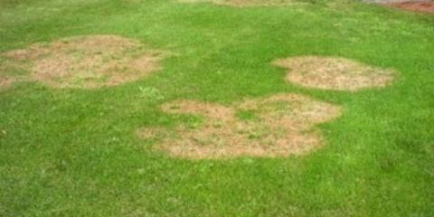 Brown Spots in the Lawn May be an Indicator of Fungus in the Coming Weeks, Jasmine Estates, Florida