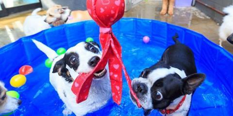 When Should I Use a Pet Boarding Facility?, Honolulu, Hawaii