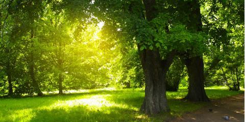 Arborist Explains 3 Common Tree Diseases in Georgia, Baldwin, Georgia