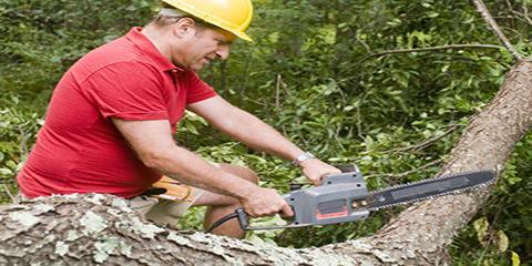 3 Reasons to Hire an Arborist as Your Professional Tree Surgeon, Sparta, Georgia