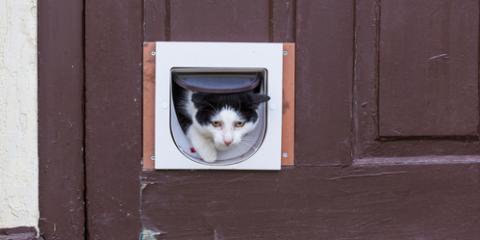 Is Adding a Pet Door to Your Garage Door a Good Idea?  , Wentzville, Missouri