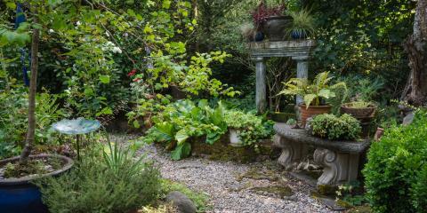 5 Plants for a Shady Yard, Arden Hills, Minnesota