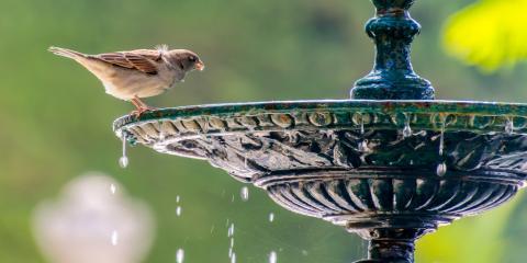 3 Ways to Attract Birds to Your Bird Feeder, Arden Hills, Minnesota