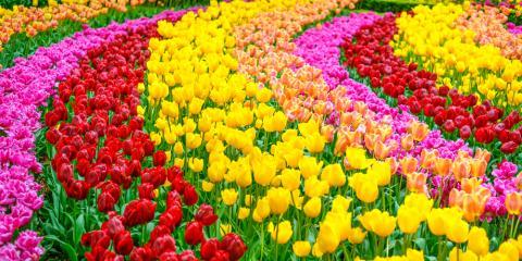 5 Garden Design Ideas to Refresh Your Yard in 2017, Minneapolis, Minnesota