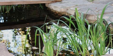 Trimm design build has 3 landscaping gardening ideas to birmingham - Building a garden pond step by step extra aesthetics and value ...