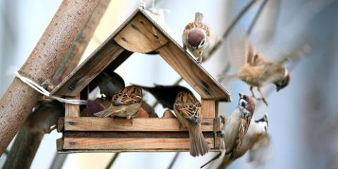 Why You Should Go to the Garden Store to Attract Wild Birds, Hutchinson, Minnesota