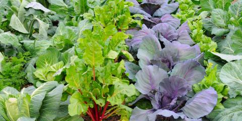 An Essential Fall Garden Supplies Checklist, Bethel, Ohio