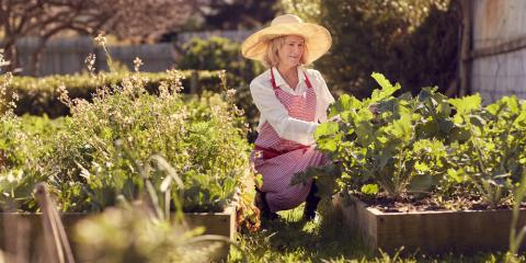 5 Tips for Growing Vegetables at Home, Delhi, Ohio